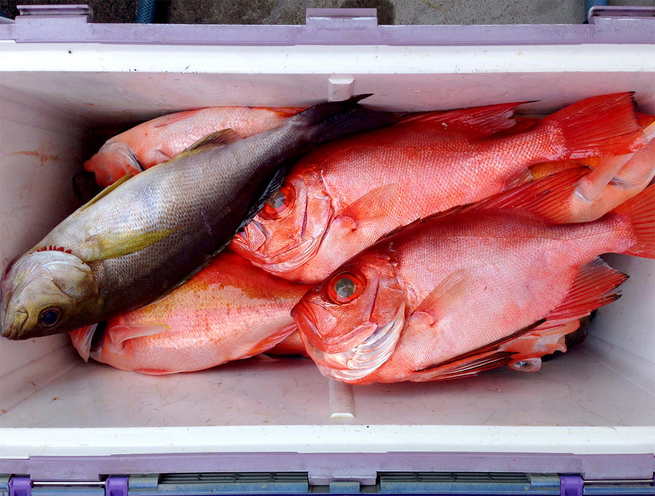 クーラーボックスに一杯の魚