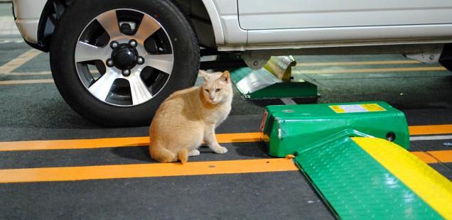 駐車場にいる猫